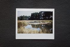 In the swamps, with Fujifilm's Instax Wide camera - Fujifilm Instax Wide, Polaroid Film, Polaroids, Cowboy Art, Photography, Autos, Instant Camera, Photograph, Fotografie