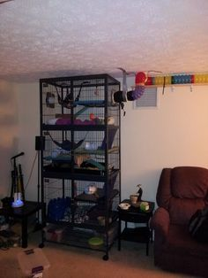 Tunnel and cage system | The Holistic Ferret Forum