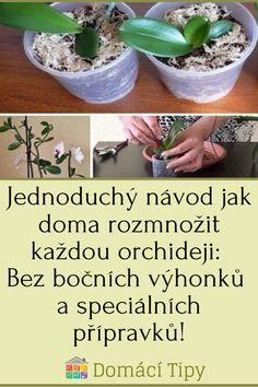Jednoduchý návod jak doma rozmnožit každou orchideji: Bez bočních výhonků a speciálních přípravků! Garden Club, Sprouts, Vegetables, Flowers, Plants, Gardening, Floral, Vegetable Recipes, Lawn And Garden