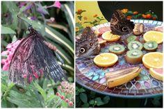 Sortie pour voir les Papillons en liberté au Jardin Botanique. #escargotetcoquille #homeschool