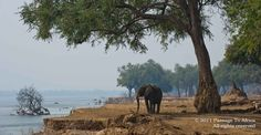 Passage To Africa Mana Pools, Zimbabwe Travel Companies, African Safari, Zimbabwe, Pools, Photo Galleries, National Parks, Elephant, Pta, Gallery