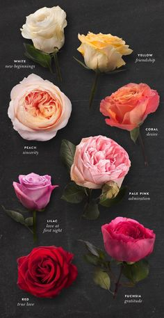 rosy Decoding the meaning of a bouquet of roses, by color.Decoding the meaning of a bouquet of roses, by color. Rose Color Meanings, Flower Meanings, Meaning Of Flowers, Peony Meaning, Flowers And Their Meanings, Meaning Of Rose Colors, Names Of Flowers, List Of Flowers, Different Types Of Flowers