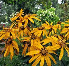 Kallionauhus; Leena Lumi: Leena Lumi's Flower Power