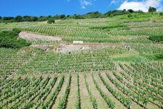 Batterieberg hillside vineyards