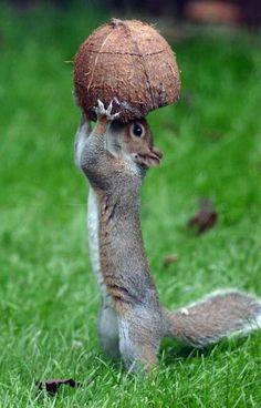 Écureuil super gourmand... ...