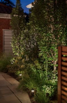 Ambient uplighting in this backyard garden makes the patio space inviting even after dark. We used low voltage landscape lights nested in between plants. Lighting Ideas, Outdoor Lighting, Landscape Services, Backyard, Patio, Landscape Lighting, After Dark, Building Design, Garden Landscaping
