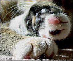 paws by cinderellaca.deviantart.com on @deviantART