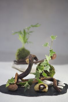 Jardin zen terrarium composition vegetale bois flotte succulentes ou plan - Bois flotte montreal ...