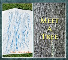 Meet a Tree: A fun sensory game for exploring trees that ends with a bark rubbing craft. This is also a great trust/team-building exercise.