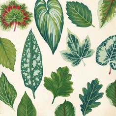 Cover Illustration of various painted leaves for Hope Jahren's memoirs Lab Girl.