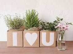 presente romântico, plantas, flores
