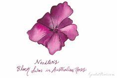 Goulet Pens Blog: Summer Love: A Bouquet of 12 Rose Inks