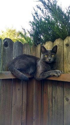 corner-cat