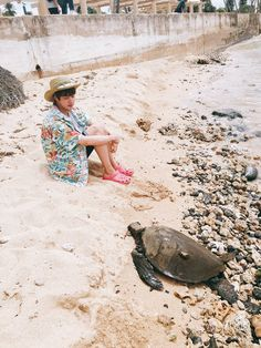 Jin ❤ [BTS Trans Tweet] (Insert Turtle Emoji)을 만나 구경했어요 ! ! / Met a (Insert Turtle Emoji) and watched it ! ! (Does Pinterest hate emoji's? They always dissapear?! fIGHT MEhh PINTEREST YOUR NOT WHAT YOU USEDD tOBeeee!!!! BTS X TURTLEs an adorable interaction yess) #BTS #방탄소년단