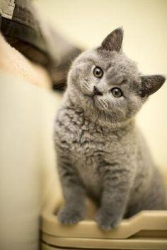 Emergency Kittens
