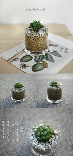 How Cute For A Table Decoration And Guest Gift!  Succulent In Glass Cup - Click for More...