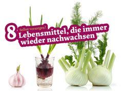 Erstaunlich viele Lebensmittel kann man nachwachsen lassen. Für die meisten braucht man lediglich Gemüsereste und eine sonnige Fensterbank.