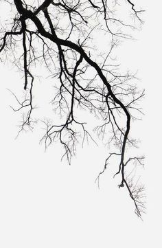 Tatoo Tree, Foto Poster, Plakat Design, Tree Sketches, Tree Art, Organic Gardening, Art Drawings, Black And White, Artwork