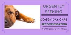 Pet owner seeking #doggydaycare #reviews http://petstayadvisor.com.au/ #CAMPBELLTOWN #NSW
