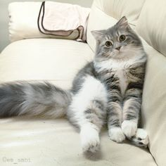 """""""All cats love a cushioned couch."""" --Theocrites"""