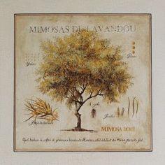 """Lámina """"Mimosas du Lavandou"""". Enmarcación de Cuadros en Madrid."""
