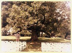 The Morven Park Oak Tree - This is where we will get married!