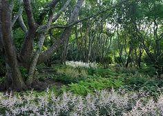 Edmund Hollander Landscape Architects | Shad Forest