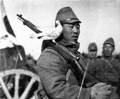 軍用鳩 : 靖國には御国の為に共に働いた鳩や犬、馬等も一緒に大切にお祀りされています。