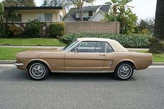 1966 Mustang...my first car.  Right of the showroom floor.  Wish I still had it.....we had lots of fun with the car....mw