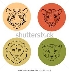 set of simple line illustrations showing different facial features of felines - tiger, lion, leopard and cheetah - stock vector