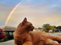 I Found Gold At The End Of The Rainbow - http://cutecatshq.com/cats/i-found-gold-at-the-end-of-the-rainbow/