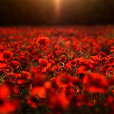 Beautiful Blossom Flower Field #retina #iPad #Air #wallpaper