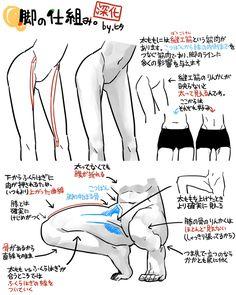 Female anatomy -- thigh lines.