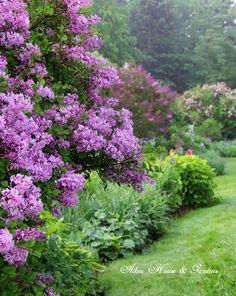 Aiken House & Gardens: Early Summer Garden Tour