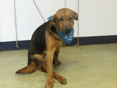 Needs SURGERY!!! PLEASE SAVE THIS DOG!!! Shepherd mix STRETCH needs leg amputated! Share for Rescue plz! Mansfield, OH http://www.petfinder.com/petdetail/28256083/  Please, please help this sweet boy. He came to the shelter as a stray on 1/6/14. His right back leg is stiff and not usable and it will need to be amputated. We are not sure if he was born this way or if he had broken it in the past and it stiffened...