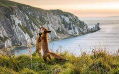 Лучшие фотографии животных прошлой недели #лайфхаки #технологии #вдохновение #приложения #рецепты #видео #спорт #стиль_жизни #лайфстайл