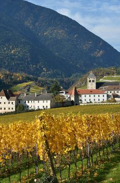 Vines 101: Trentino-Alto Adige Wine.  http://www.butterfield.com/blog/2014/07/07/trentino-alto-adige-wine/  #travel #Italy #Dolomites #wine #drink #guide #holiday #vacation #trip #myBNR