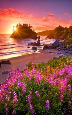 """""""This beach is beautiful in person. 😊😊 Beach Garden"""" Near Arcata, California.Lupine flowers glow in the last light of sunset overlooking the sea stacks and sandy beaches of the Northern California coast. ~By Marc Adams Beautiful Sunset, Beautiful Beaches, Beautiful World, Beautiful Scenery, California Coast, Northern California, Arcata California, Trinidad California, Eureka California"""