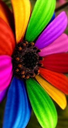 daisy of the rainbow clan- via living a poetic life. Taste The Rainbow, Over The Rainbow, World Of Color, Color Of Life, All The Colors, Vibrant Colors, Happy Colors, Rainbow Colors, Rainbow Stuff