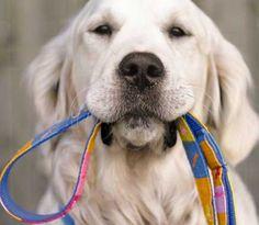 Como escolher o dog walker ideal?