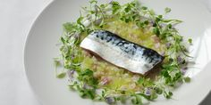 In this mackerel fillet recipe, the mackerel is cured in citrus and served with lemon sherbet dressing. Luke Holder's recipe is a brilliantly fresh take on mackerel.