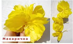 цветя от тишу
