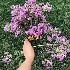 A handful of Pholx is greater than two in the bush. From spring, to summer, to fall, Phlox never stop blooming. Pressed Phlox is even better! They create length in your pressed flower artwork with punches of color floating through the top. ⁣  #pressedflower #pressedflowerart #pressedflowers #pressedflowertechniques #pressedflowerlove #cutflowers #driedflower #driedflowerart Drying Flowers, Cut Flowers, Natural Ecosystem, Cut Flower Garden, Flower Artwork, Pressed Flower Art, How To Preserve Flowers, Garden Gifts, Bats