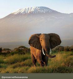 All About Elephants, Animals, Animales, Animaux, Animal, Animais