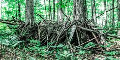 Building a Ground Blind on State Land  - http://tribunejuice.com/2014/08/building-a-ground-blind-on-state-land/