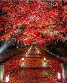 """Red Autumn, Kyoto, Japan #TourThePlanet Photography by @takahiro_bessho"""