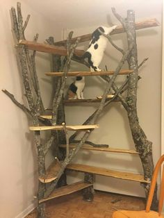 Cat Care Keeping Your Cat Healthy and Your Home Clean Diy Pour Chien, Niche Chat, Outdoor Cat Enclosure, Diy Cat Tree, Cat Playground, Outdoor Playground, Cat Run, Cat Shelves, Wood Shelves