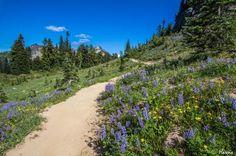 Tipsoo Lake - Naches Peak Loop Trail -byharris