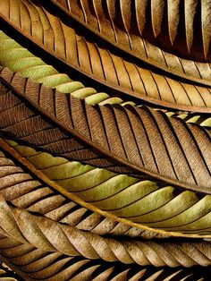 Dried leaves form a beautiful fractal pattern