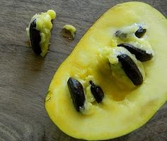 """Paw Paw (aka: custard fruit). Native to MI. I want to try one!!! Supposed to taste banana-ish/cucumber-ish. Not to be confused with papaya (sometimes called """"paw paw"""" or """"pawpaw"""")."""